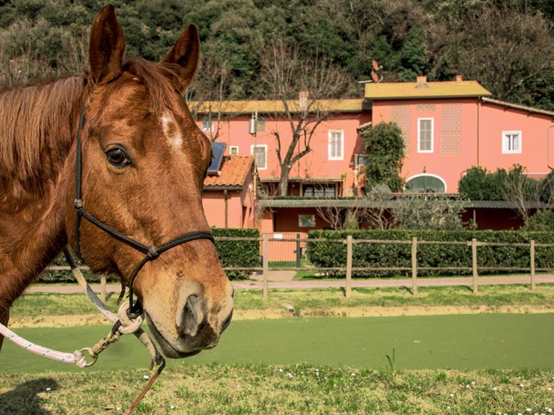 Agritourism in Tuscany Farmhouse with horses - Italy